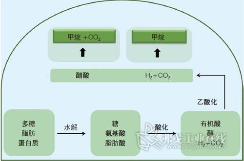 沼气设备微生物作用步骤的示意图