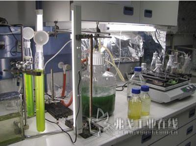 蓝藻的生物毒性研究