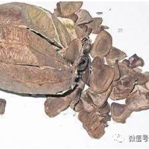 【震惊】中国肝癌高发的罪魁祸首竟是这几味中药!国际医学界沉重的新发现