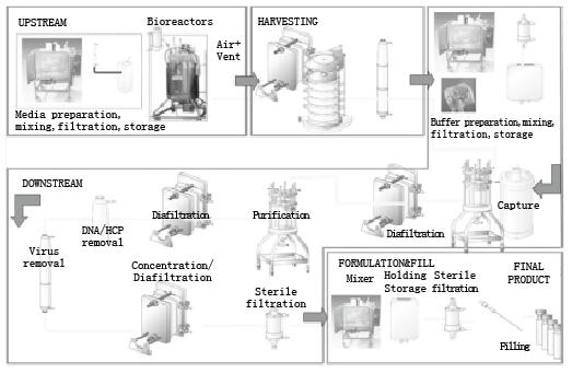 图1 生物工艺流程